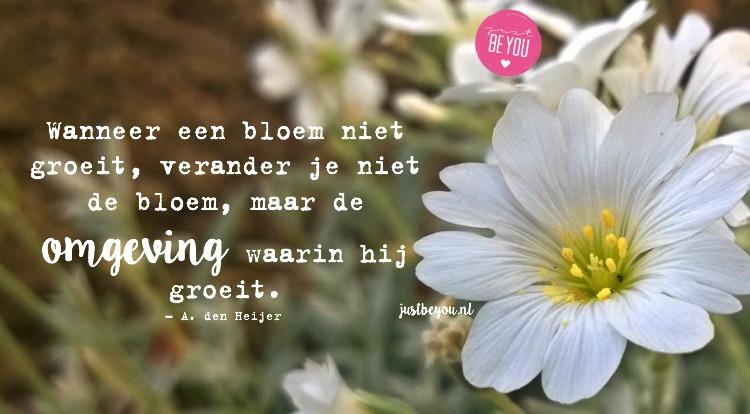 Wanneer een bloem niet groeit, verander je niet de bloem maar de omgeving waarin hij groeit